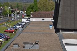 Des ruches sur les toits